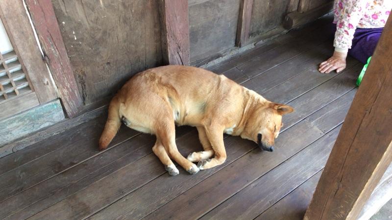cutie doggie!